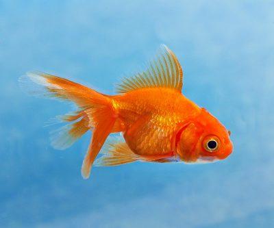 Фотосъемка аквариумных рыбок для каталога